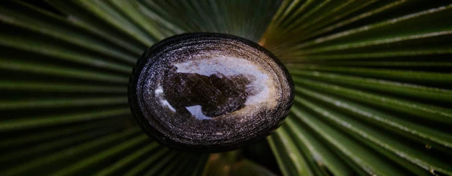 Piedra y palmera